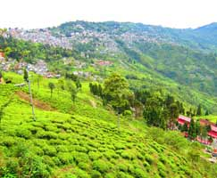Gangtok Honeymoon Trip